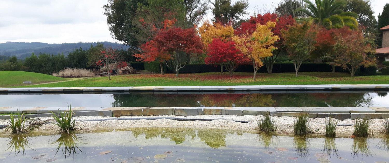 Dise o y ejecuci n de piscinas y estanques por xard n - Piscinas santiago de compostela ...