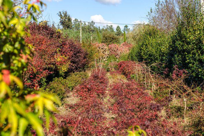 Vivero propio con diversidad de rboles y plantas xard n for Viveros de plantas en vigo