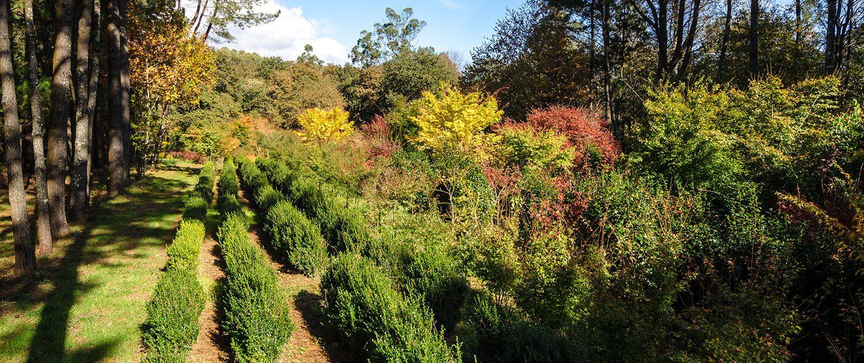 Vivero propio con diversidad de rboles y plantas xard n for Viveros y jardines