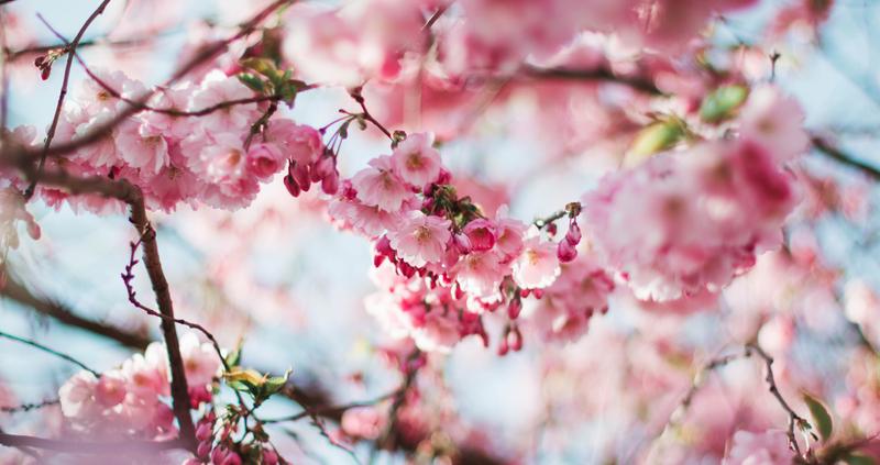 primavera-jardín